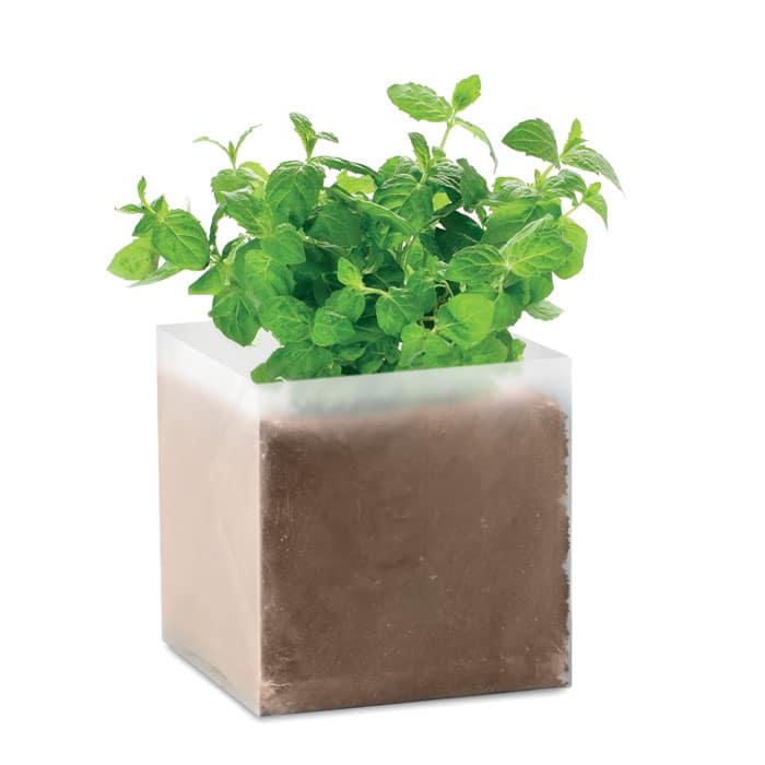 grown mint seeds